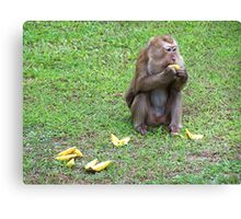 Hungry Monkey Canvas Print
