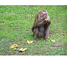 Hungry Monkey Photographic Print