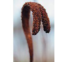 Auburn Pigtails Photographic Print