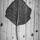 Black & White Leaf by Kathleen  Bowman