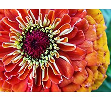 whorl of curls Photographic Print