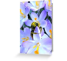 SPRING HAS SPRUNG IN ENGLAND Greeting Card