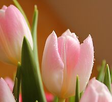 Tulips in a Bunch by karina5