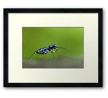 Tiger Beetle Framed Print
