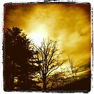 """Black Trees on a Yellow Sky by Christine """"Xine"""" Segalas"""