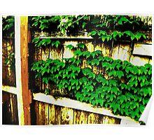 Backyard © Poster