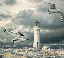 Gulls at Perch Rock by Tarrby
