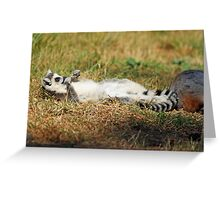 sun bathing ring tailed lemur  Greeting Card