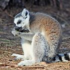 lemur having a snack by liza scott