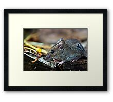 Little Mouse Framed Print