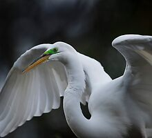 His Majesty The Great White Egret by Joe Jennelle