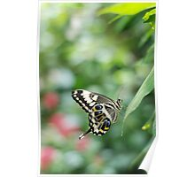 butterfly in green Poster