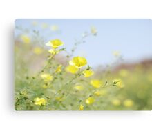 yellow cups - for amanda Canvas Print