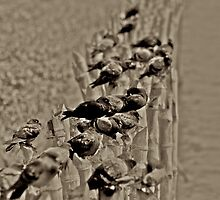Art of bird life... by Kornrawiee