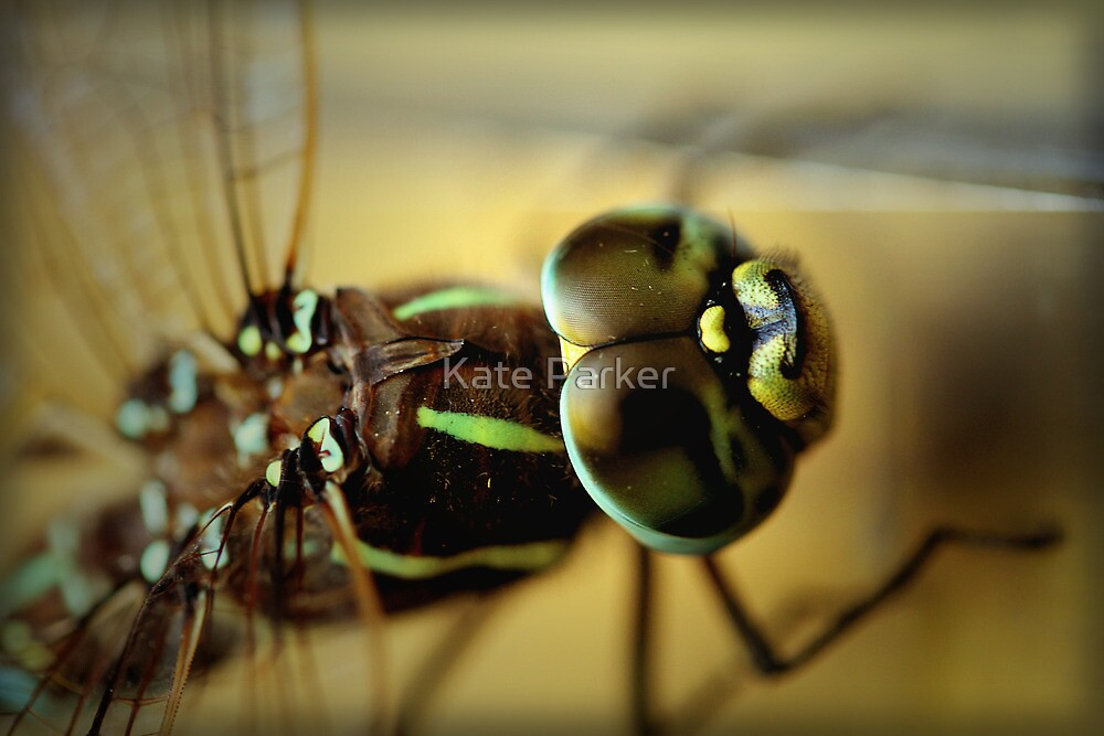 Dragonfly by Kate Parker