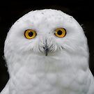 Male Snowy Portrait by Daniel  Parent