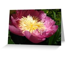 Precious Peonies Greeting Card