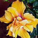 Hibiscus (10/29/15) by Bryan D. Spellman