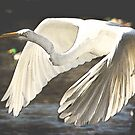 Egret In Flight by George Lenz