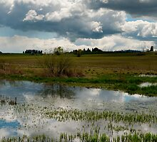 Wetland Series, No. 5 by Lee LaFontaine