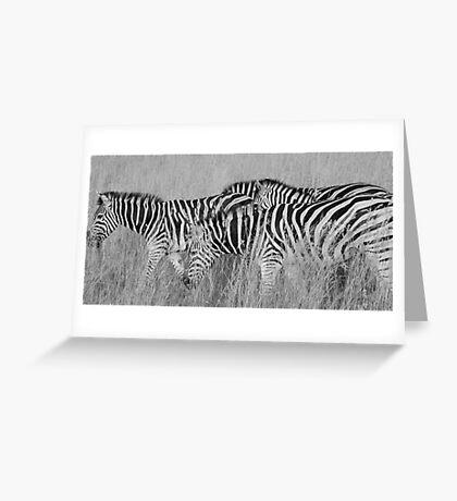 black stripes, white stripes Greeting Card