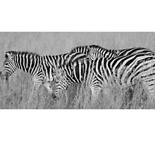 black stripes, white stripes Photographic Print