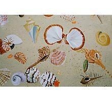 Shells - Acrylic on Wood Photographic Print