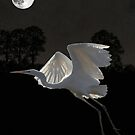 Great Egret In Flight by Eric Kempson