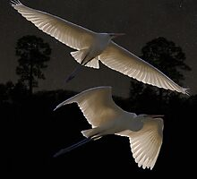 Great Egrets In Flight by Eric Kempson