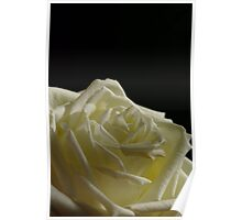 Tenderness of a Rose Poster