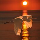 Great Egret at sunset by Eric Kempson