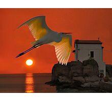 Great Egret sunset in Skala Photographic Print