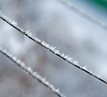 snow flakes on a wire - 02 by wildrain