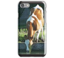 Cow Drinking iPhone Case/Skin