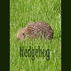 Hedgehog by Titia Geertman