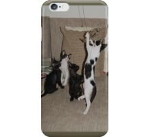 Kittens Playing iPhone Case/Skin