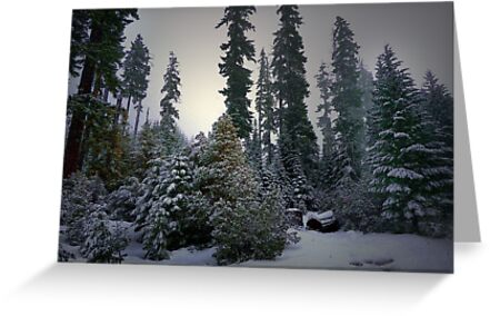 Low Light Delight by Charles & Patricia   Harkins ~ Picture Oregon