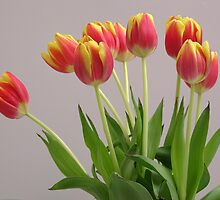 Vase of tulips by daliant