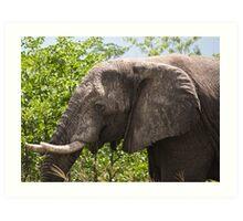 Ele.-   African Savanna Elephant (Loxodonta africana) Art Print