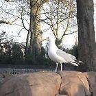 London Zoo/Seagull -(190212)- digital photo by paulramnora