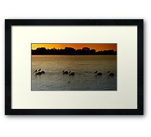 Pelican Crossing Framed Print