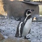 London Zoo/Penguin -(190212)- digital photo by paulramnora