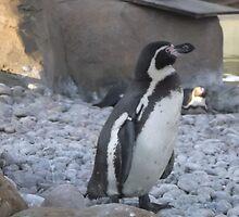London Zoo/Penguin -(190212)- digital photo by paulramnora