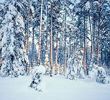 WINTER TIME IN FOREST by Romeo Koitmäe