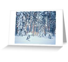 WINTER TIME IN FOREST Greeting Card