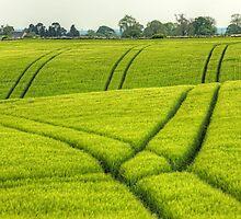 Spring Field by JPassmore