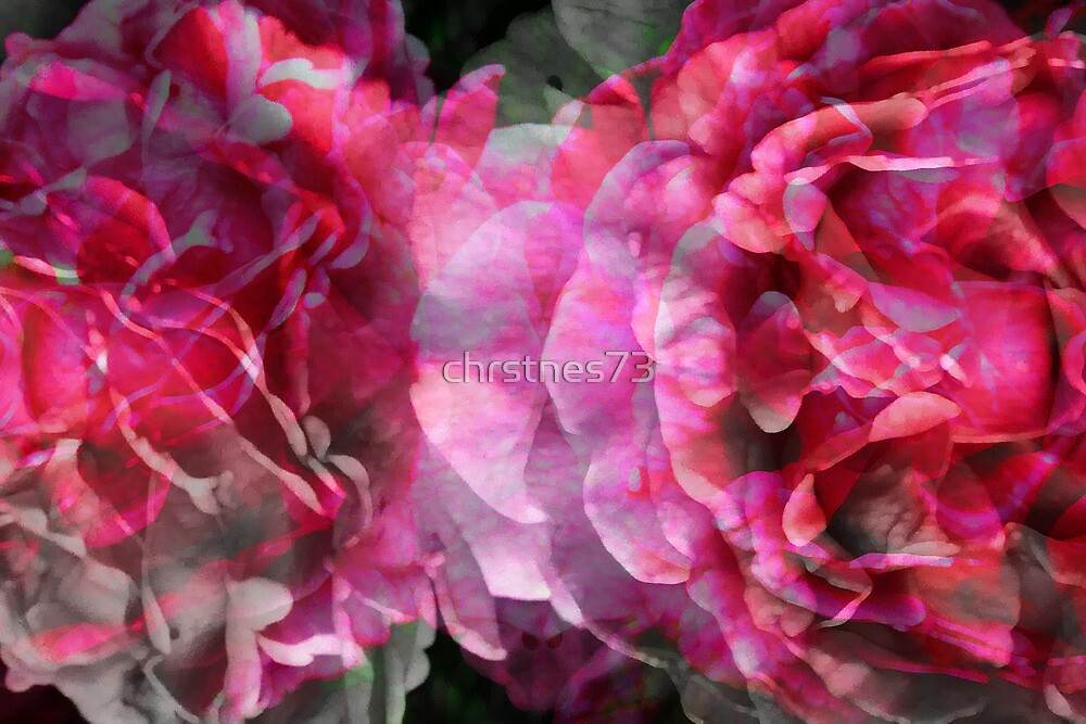 Rose Pattern by chrstnes73