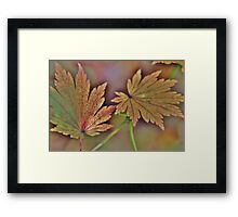 Green leaf Framed Print
