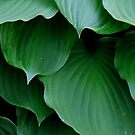 Hosta Green by Betty Northcutt