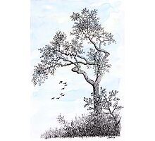 PENDRAWING TREE - BACKGROUND AQUAREL Photographic Print